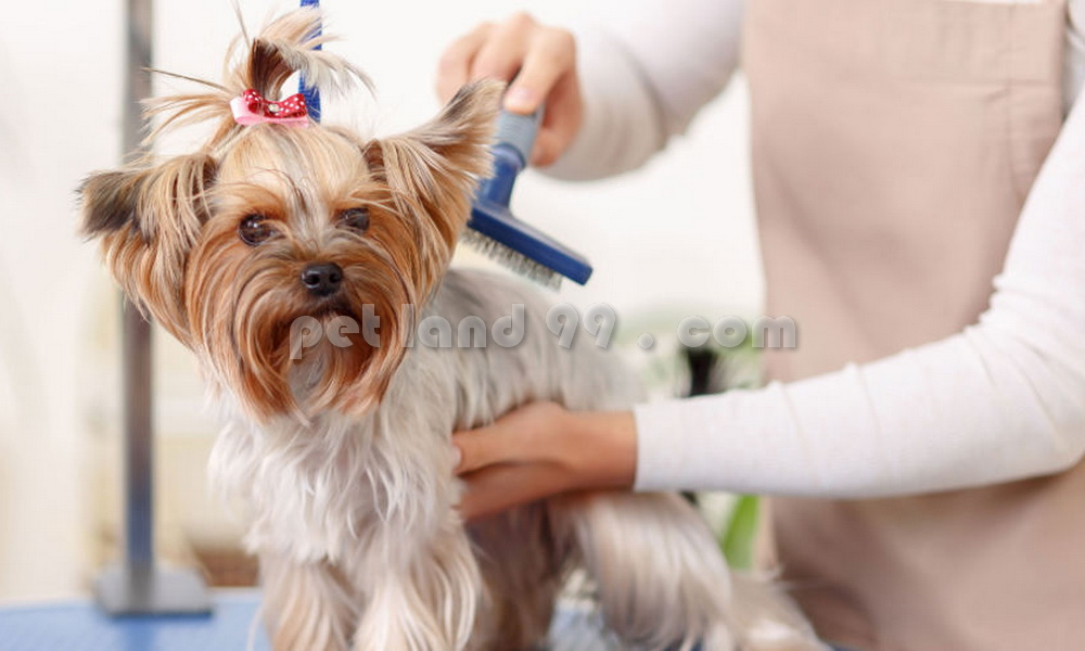 آرایشگر حرفه ای حیوانات