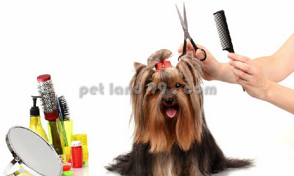 آرایشگر سیار حیوانات