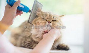 آرایشگر گربه در منزل