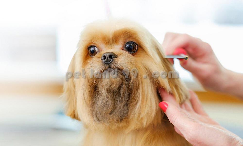 آرایش حیوانات در منزل