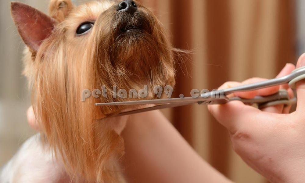 آرایش سگ در منزل