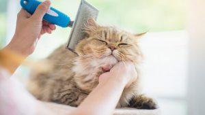 آرایش گربه