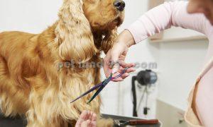 آموزش آرایش سگ