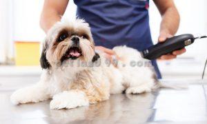 اصلاح سگ با موزر خانگی