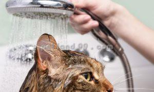 شستشوی درمانی گربه