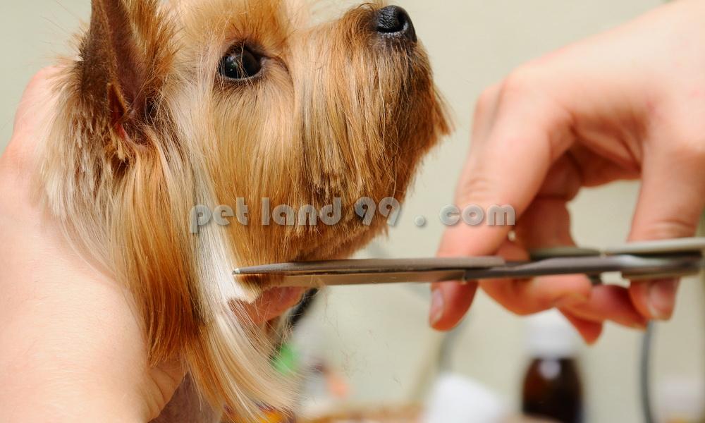 اصلاح سگ در منزل