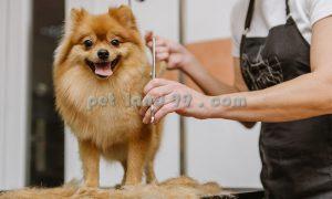 قیمت آرایش سگ