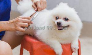 آرایش و اصلاح سگ