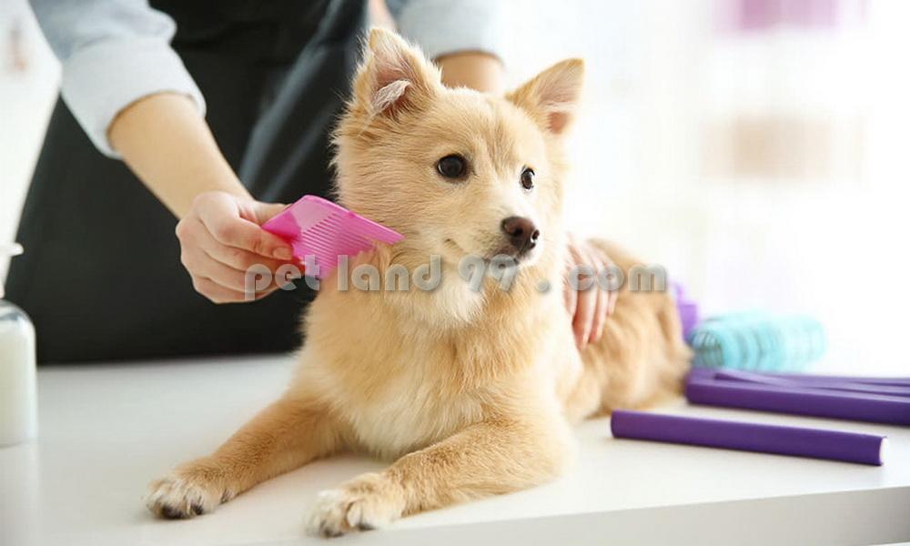 آموزش اصلاح سگ