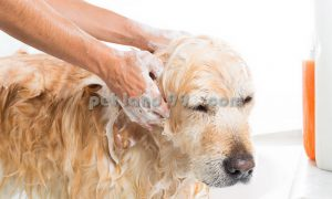 شستشو و اصلاح سگ