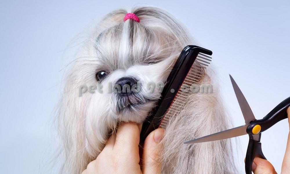 آرایشگاه سگ