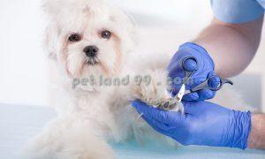 آموزش اصلاح موی حیوانات