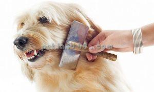 اصلاح موی سگ ارزان