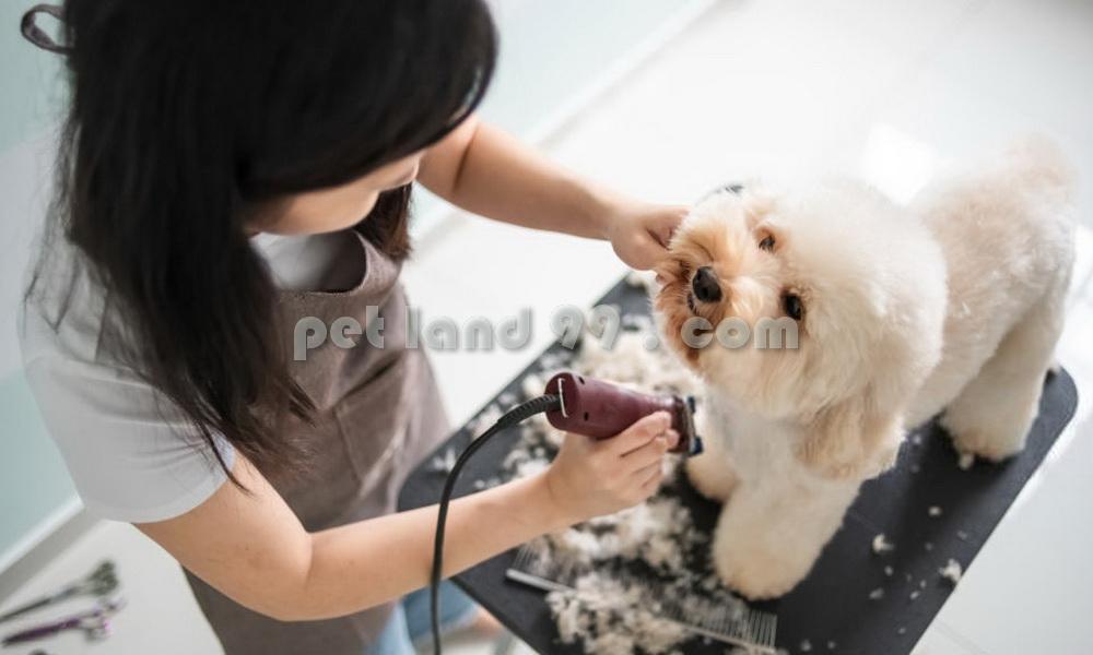 آموزش آرایش موی سگ