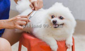 آموزشگاه اصلاح حیوانات خانگی