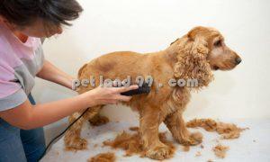آموزش اصلاح حیوانات