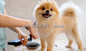آموزش اصلاح موی سگ