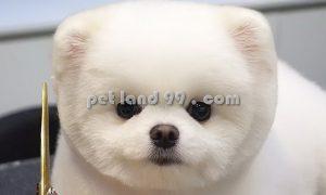 آرایشگاه سگ ارزان