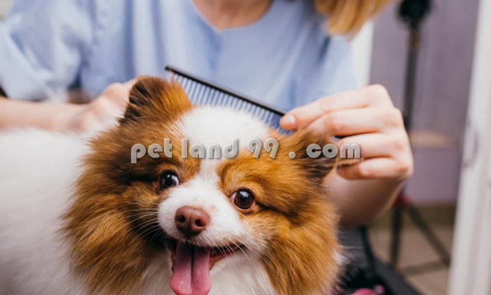 اصلاح موی توله سگ