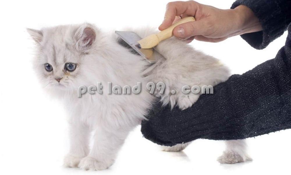 اصلاح و آرایش گربه در تهران