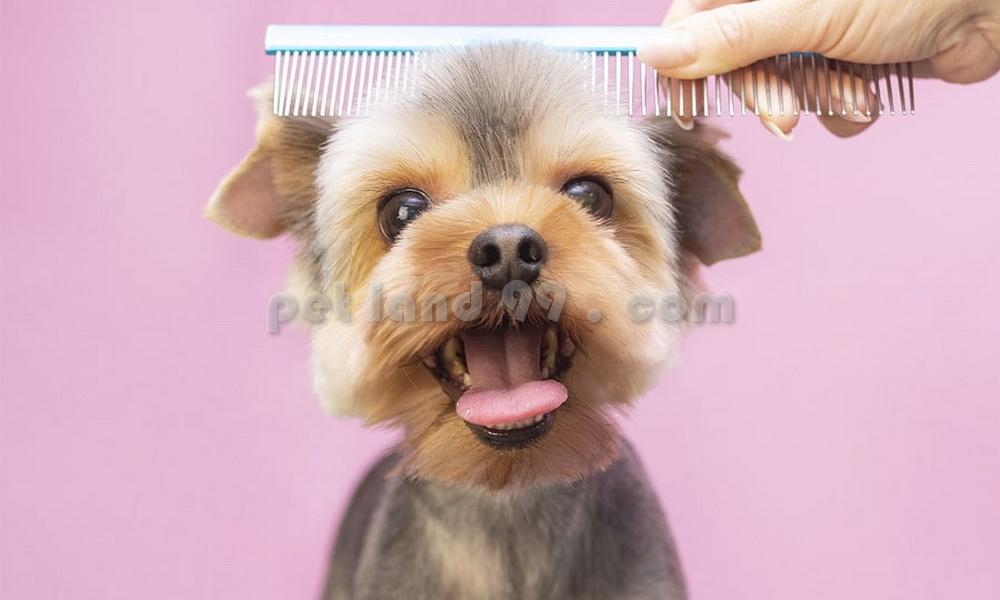 شغل آرایشگری حیوانات