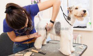 نظافت و بهداشت سگ