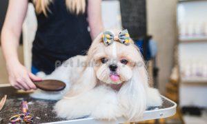 نظافت و نگهداری سگ شیتزو