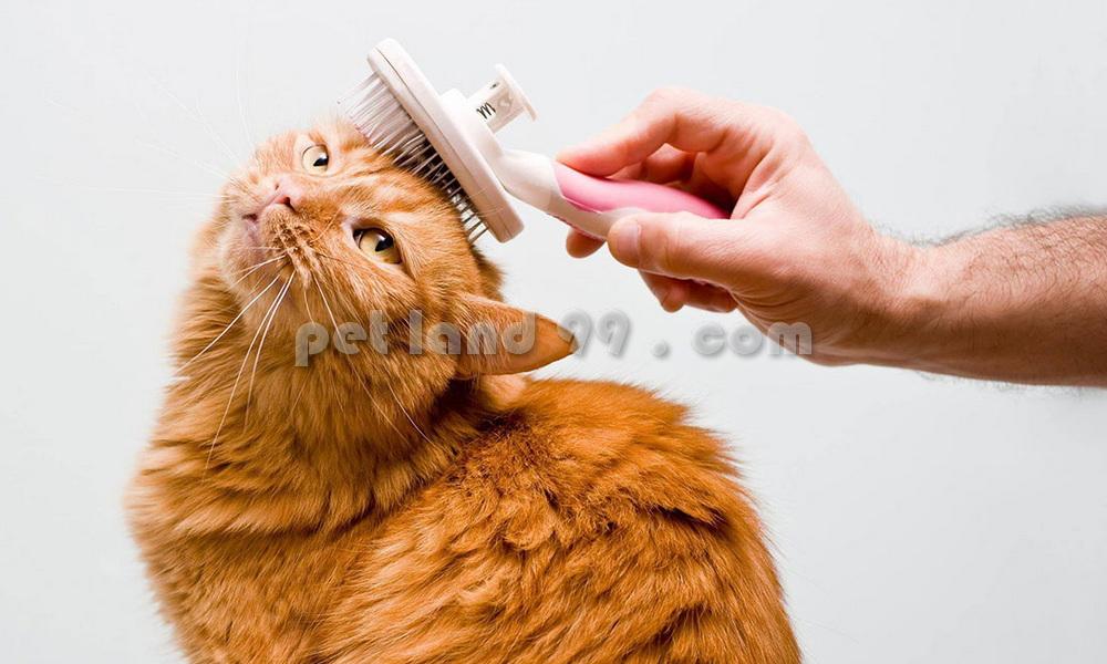 آرایشگاه تخصصی گربه