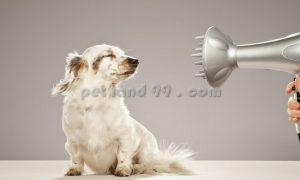 آرایشگر سیار سگ