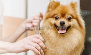 آرایش حیوانات در محل و منزل شما