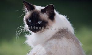 آموزش آرایش گربه