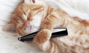 اصلاح گربه با ماشین موزر خانگی