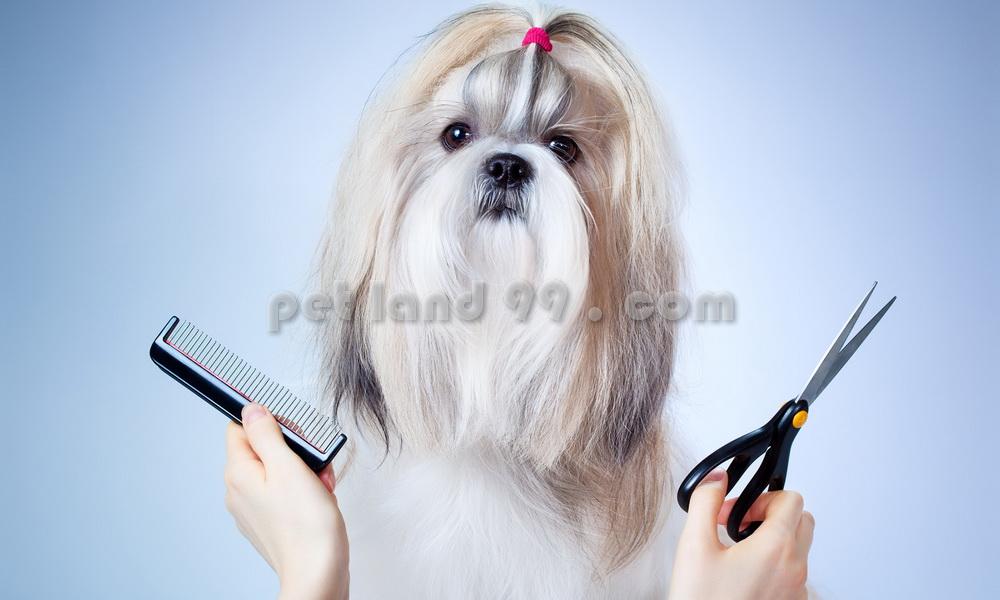 پکیج آموزشی آرایش حیوانات خانگی