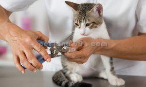 آرایشگاه گربه