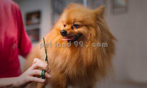 آرایش پت و حیوانات خانگی