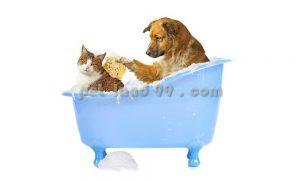 شستشوی حیوانات خانگی