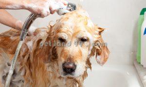 شستشوی سگ در منزل