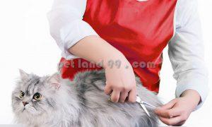 آموزش آرایش حیوانات