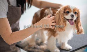 آرایش موی سگ