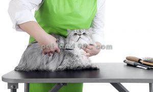 آموزش اصلاح گربه