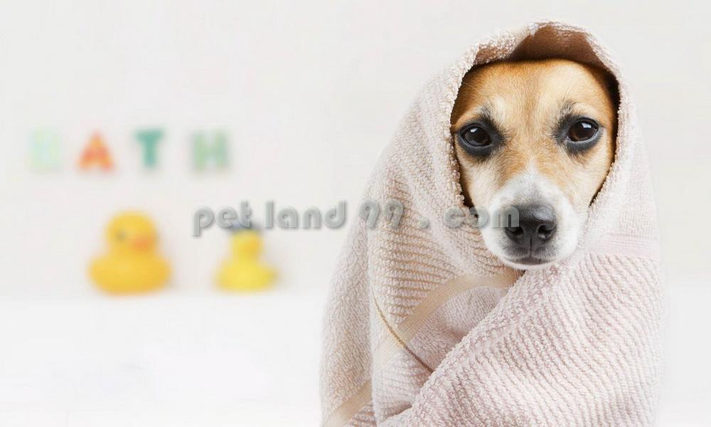 شستشوی سگ در محل