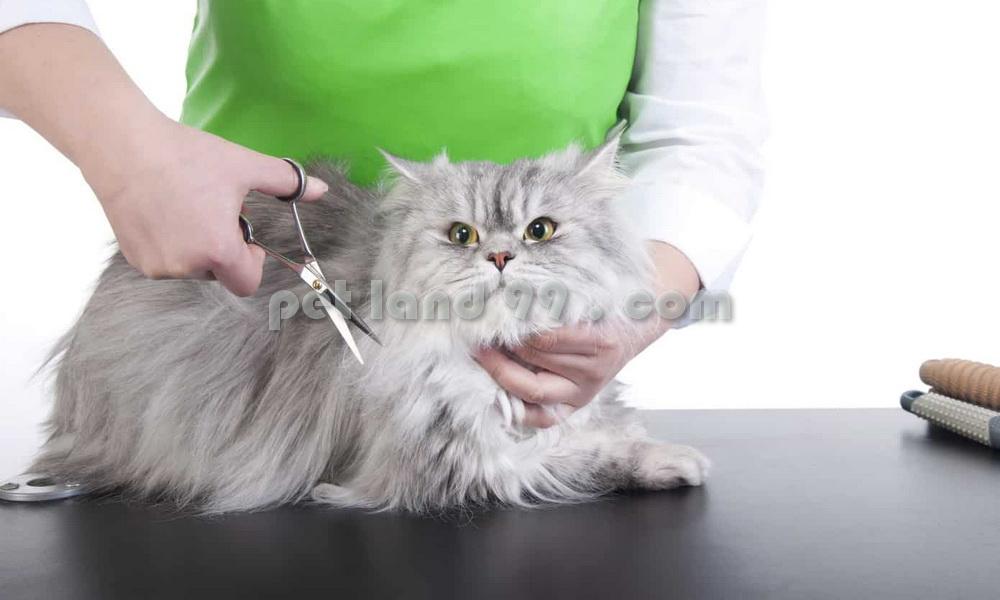 آرایشگاه گربه در تهران