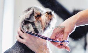 آموزش اصلاح حیوانات خانگی
