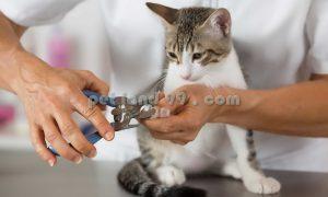 آموزش اصلاح موی گربه