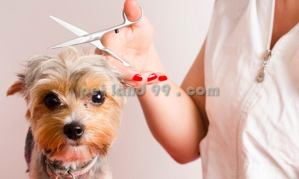 اصلاح سگ