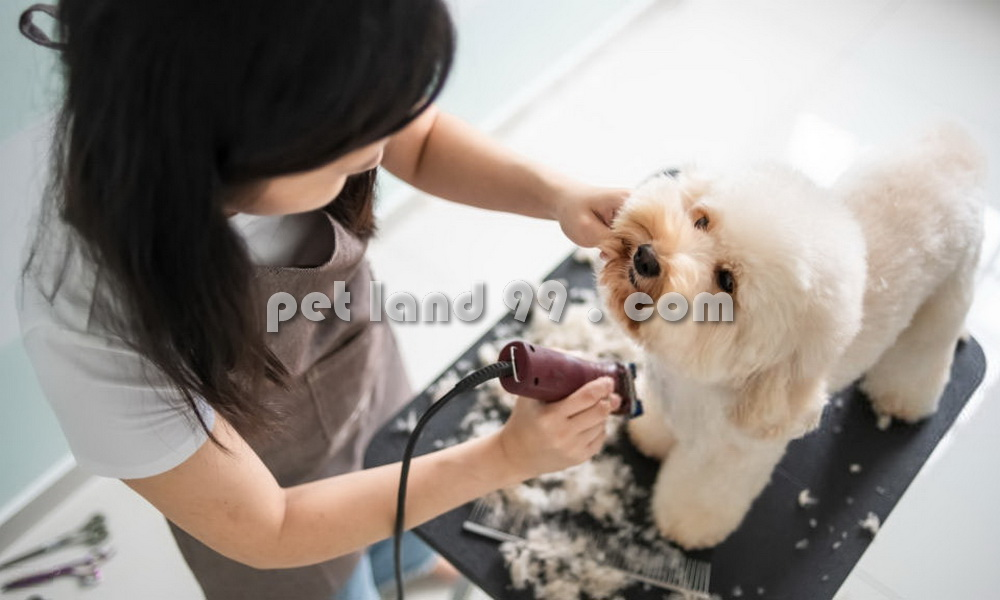 آموزشگاه آرایش سگ