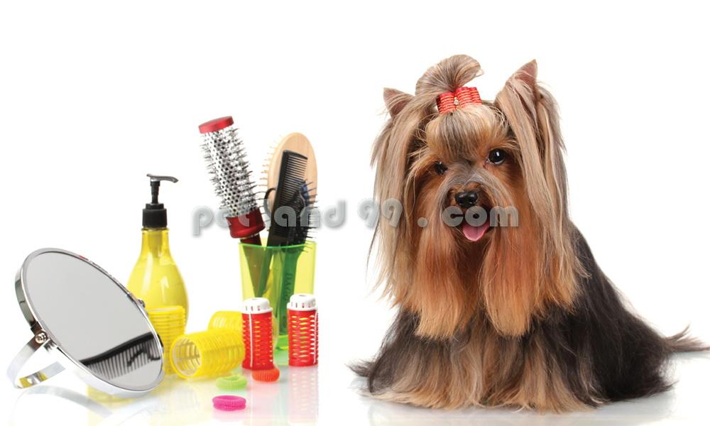 آموزش آرایشگری سگ
