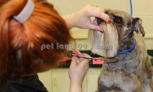 آموزش تخصصی آرایش سگ