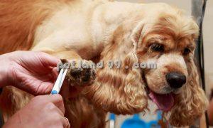 آرایشگر سگ در تهران
