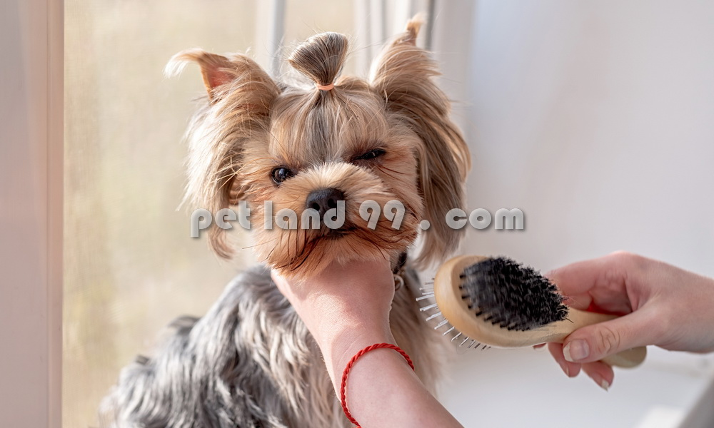 تخفیف اصلاح سگ